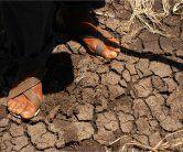 Guatemala benötigt Hilfe wegen schwerer Dürre