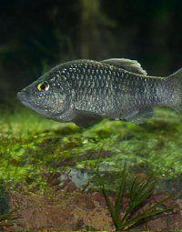 Stark bedrohte Fische im Wiener Tiergarten