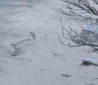 Island: Seemonster- Video keine Fälschung