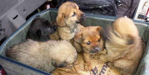 45-Jähriger transportierte auf A1 fünf Hundebabys in Koffer