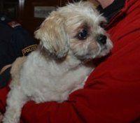 Feuerwehr rettete Hund aus Lichtschacht