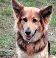 Ein Fest für Hunde im Wiener Prater