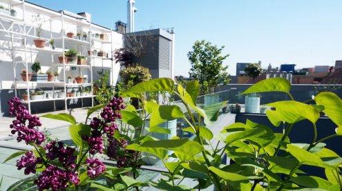 Rooftops: Die Lokale mit den besten Aussichten über Wien