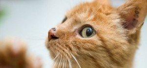 Brand in Brigittenau: Vier verletzte Polizisten und eine gerettete Katze