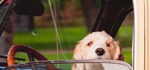 Urlaub mit dem Hund: Tipps für eine stressfreie Reise mit Vierbeiner