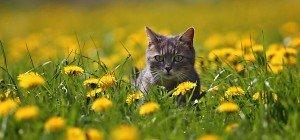 In Frauenkirchen verschwanden binnen zwei Jahren 52 Katzen