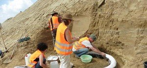 Sensationell: Millionen Jahre altes Mammut gefunden