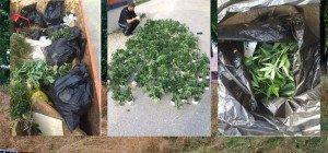 251 Cannabispflanzen auf Firmengelände in Wien-Penzing entsorgt