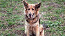 Giftköder-Attacke: Hund in Wien-Döbling verendet