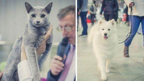 Alles rund um Hund, Katze und Kleintier: Die Haustiermesse 2017