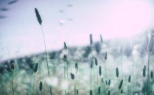 Pollenbelastung ist derzeit extrem hoch