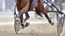 Wotan Casei gewann 132. Traberderby in der Krieau