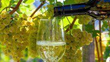 Wiener Weinpreis wirdim Rathaus verliehen