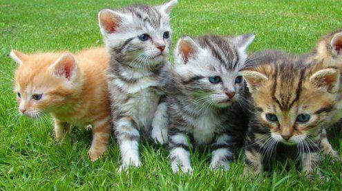 Umstrittenes Tierschutzgesetz: Regierung beginnt einzulenken