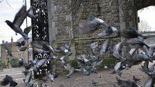 Weil ihn Vögel nervten: Schüsse aus Wohnung