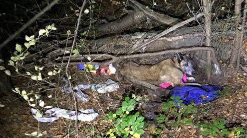 Völlig entkräfteter Hund aus Wald-Obdachlosenlager gerettet