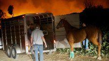 Kalifornien - Pferde in Feuer und Panik gefangen