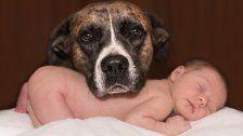 Einen Hund an ein Baby gewöhnen: Tipps