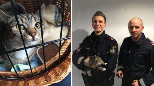 Polizisten retten eine ausgesetzte Katze nahe der Jubiläumswarte