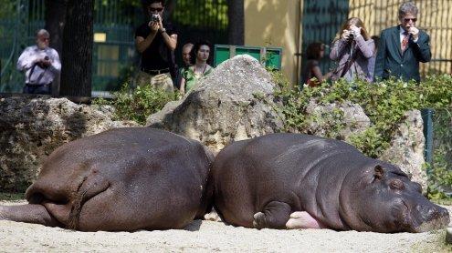 Mehr Platz für Tiere: Bauarbeiten in Schönbrunn auf Hochtouren
