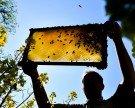 Aktiver Bienenschutz: Wien und Slowenien auf einer Welle